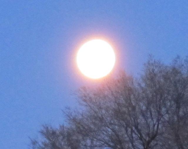 full moon setting in the dawn sky