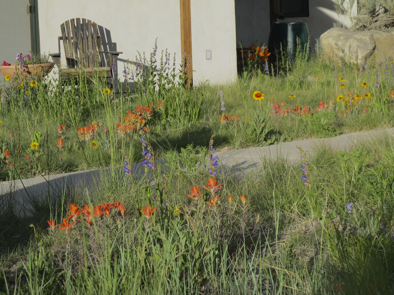 """June wildflowers in the front yard """"unlawn."""""""