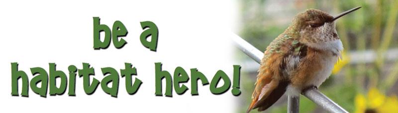 Habitat Hero logo with rufous hummingbird