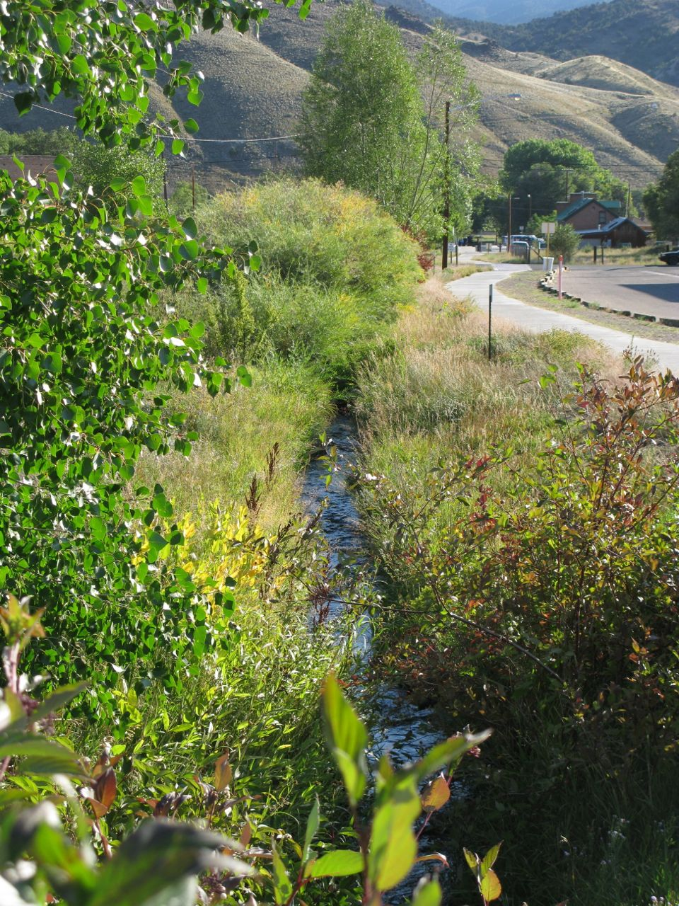Ditch Creek, vibrant and sparkling after a decade of restoration work.