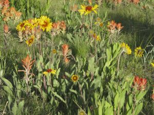 Who needs a lawn when you can have a wildflower-studded prairie?