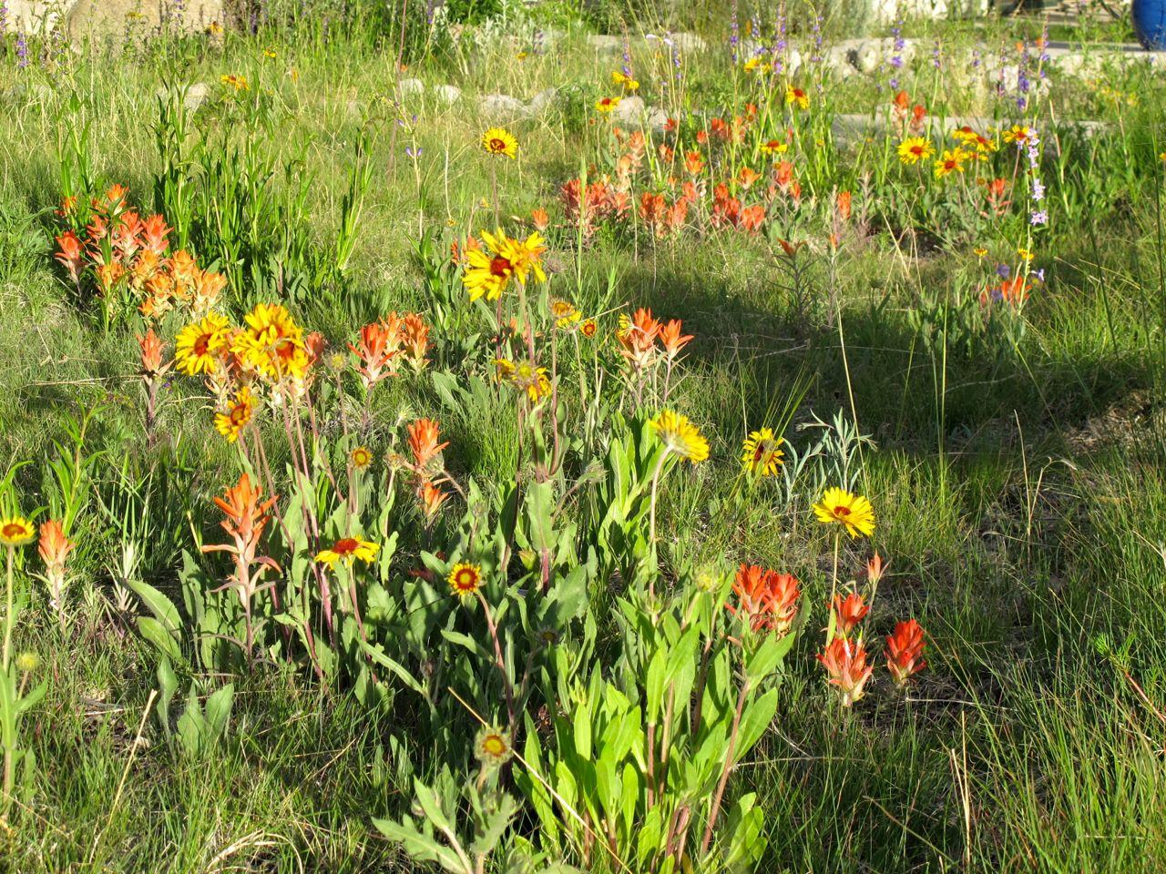 Roadbase Mix meadow at Terraphilia in summer