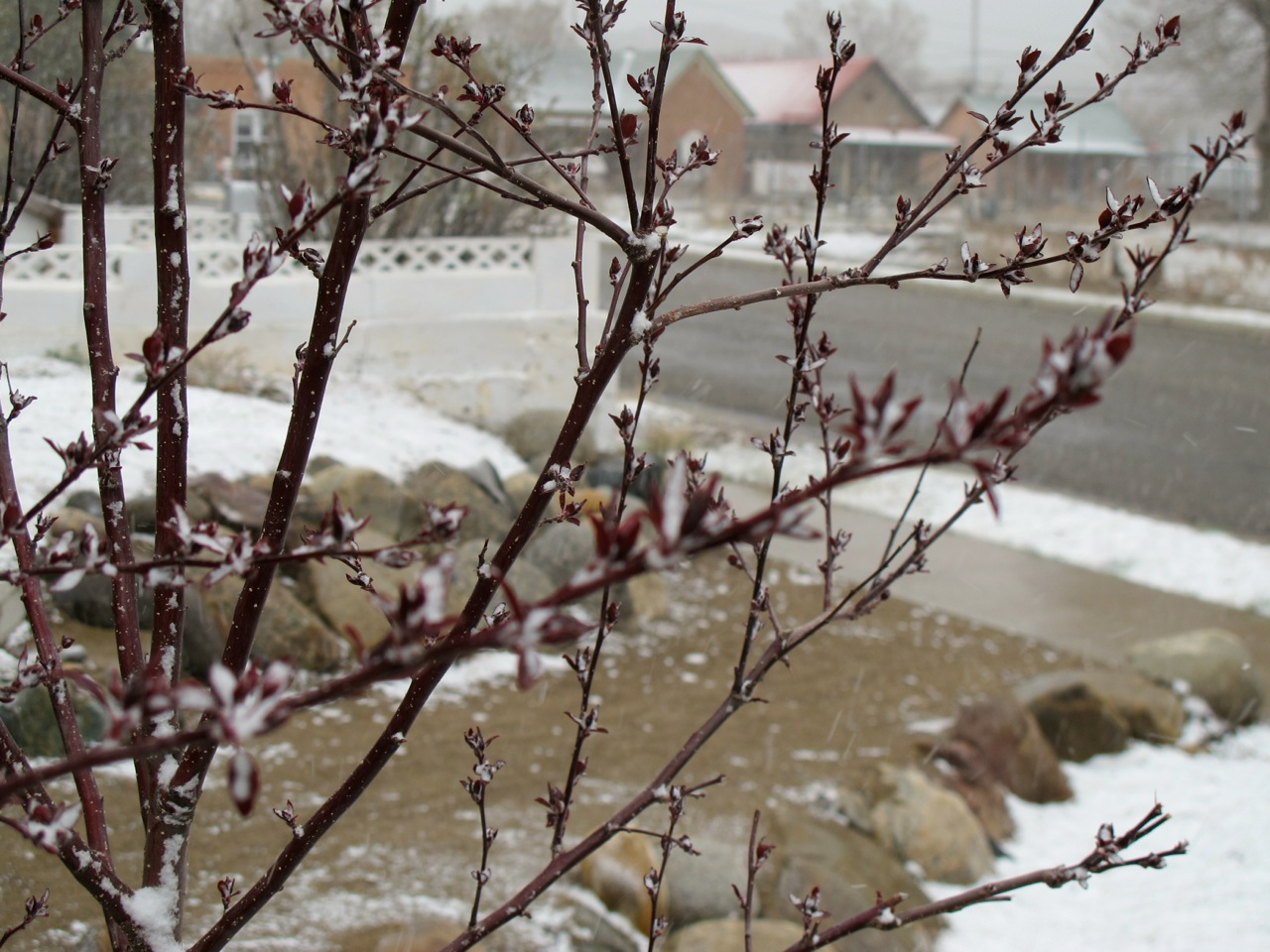 Snow clings to tiny crapapple leaves and other surfaces.