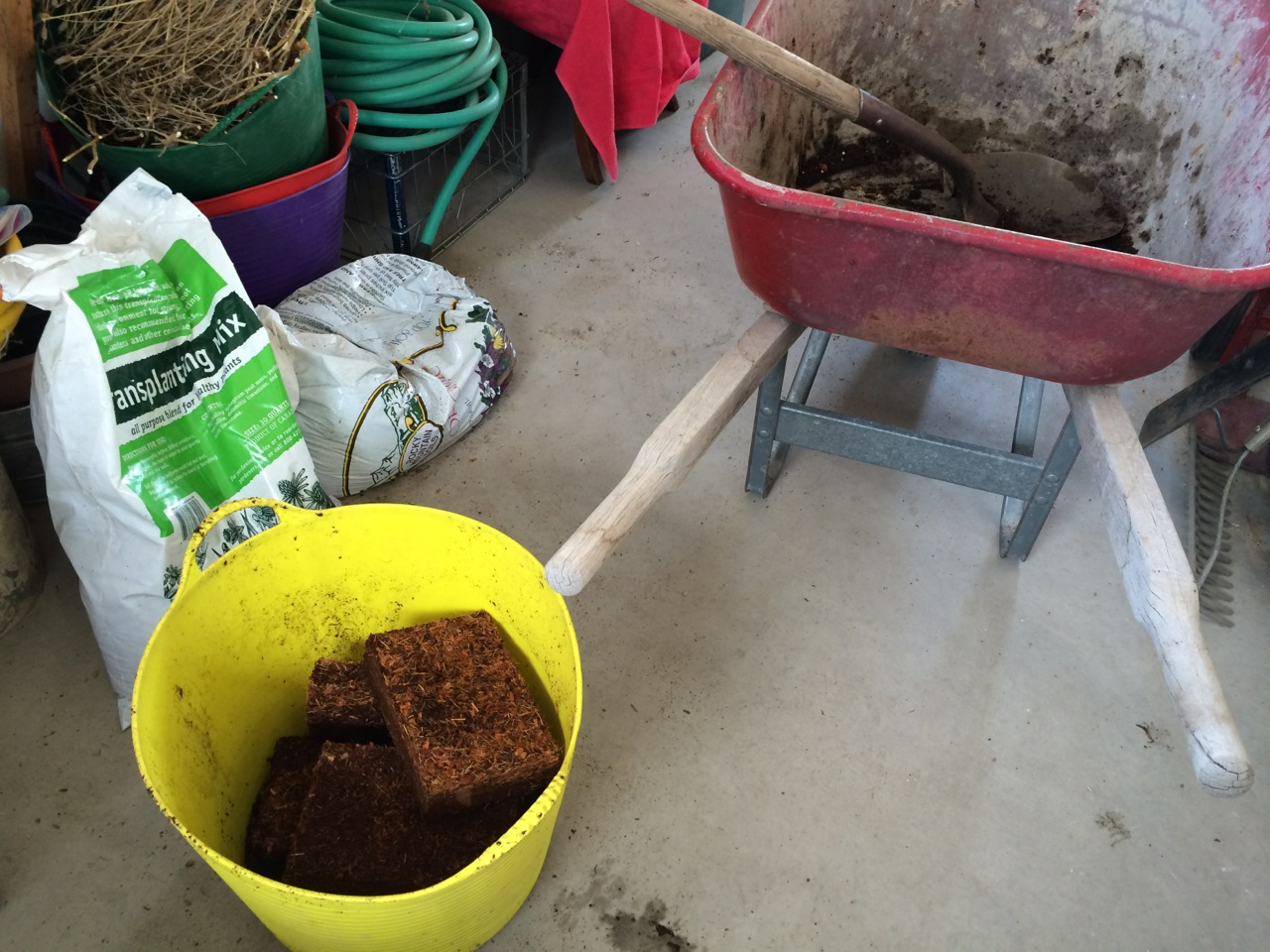 Coir bricks soaking up warm water in a garden trug next to the wheelbarrow in my shop.