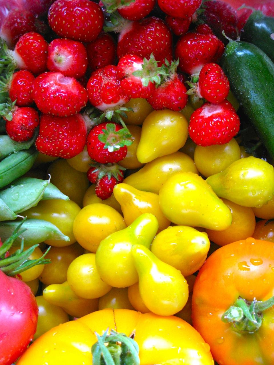 A morning's garden harvest