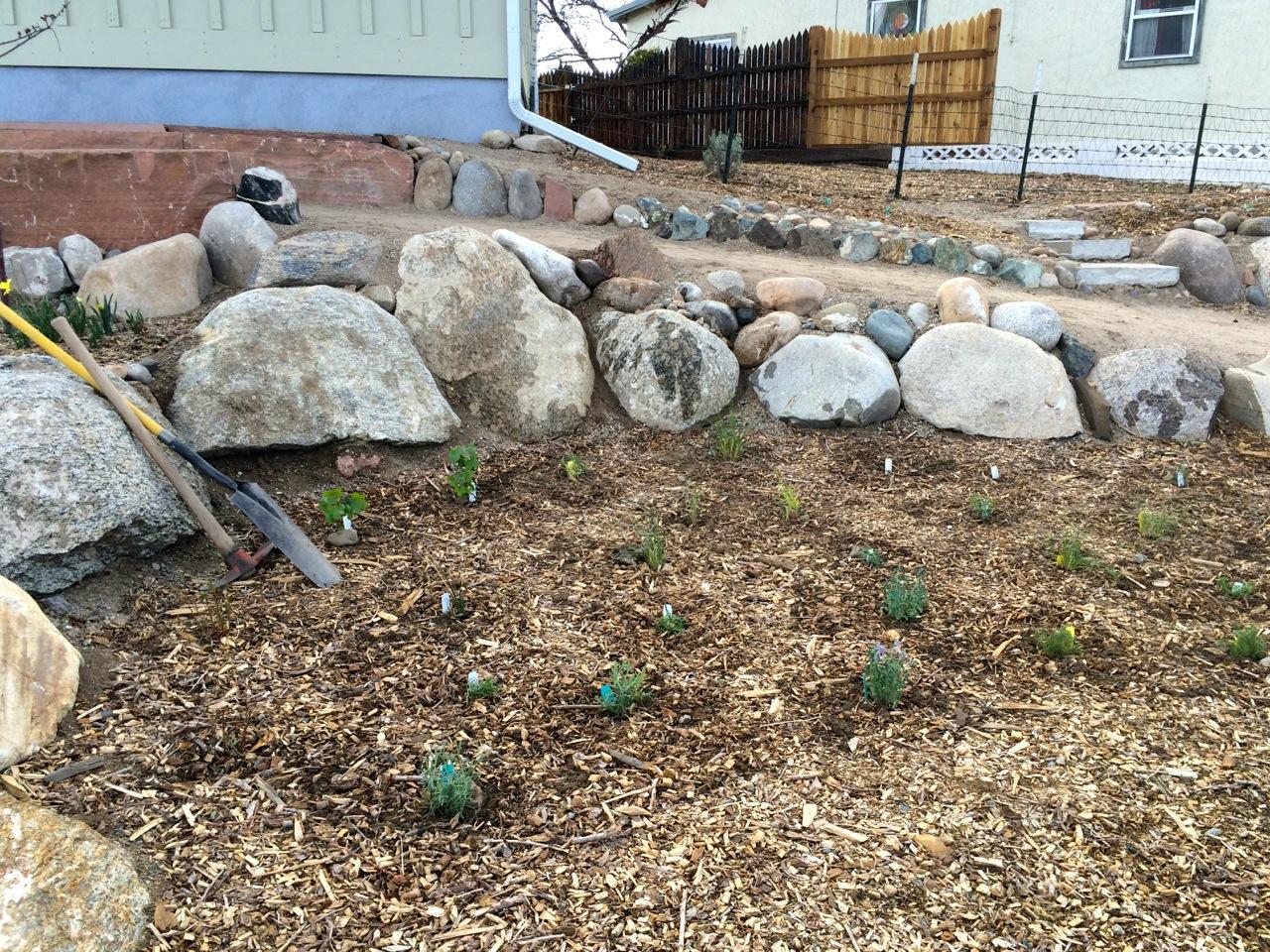 My mattox and spade relaxing after planting 33 perennials in a pollinator garden.