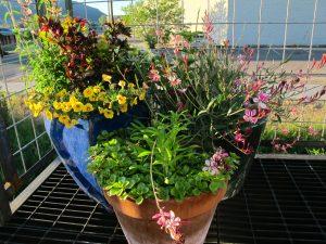 hummingbird habitat, container pollilnator garden