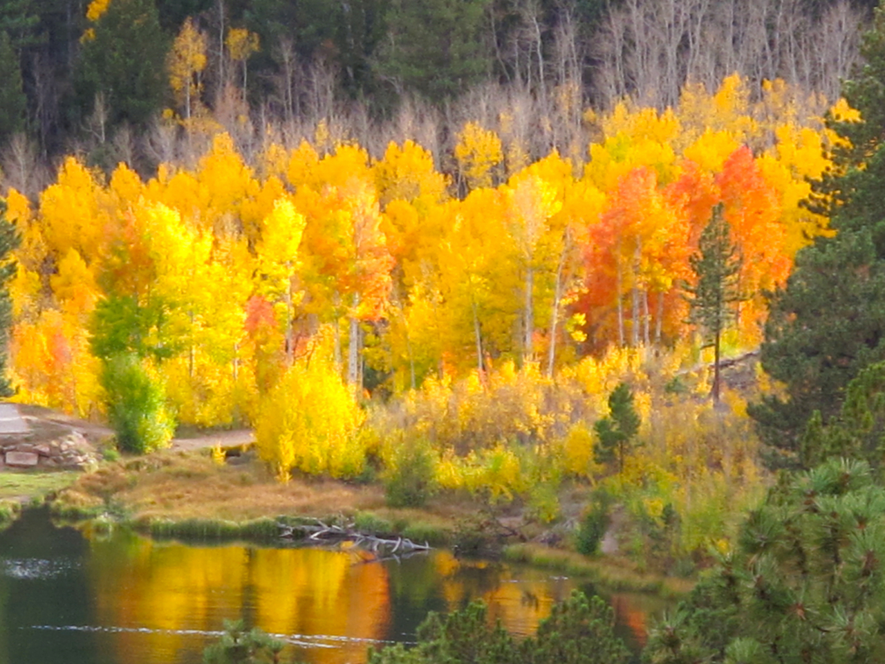 ... and then a blast of brilliant aspens below the road, reflected in O'Haver Lake