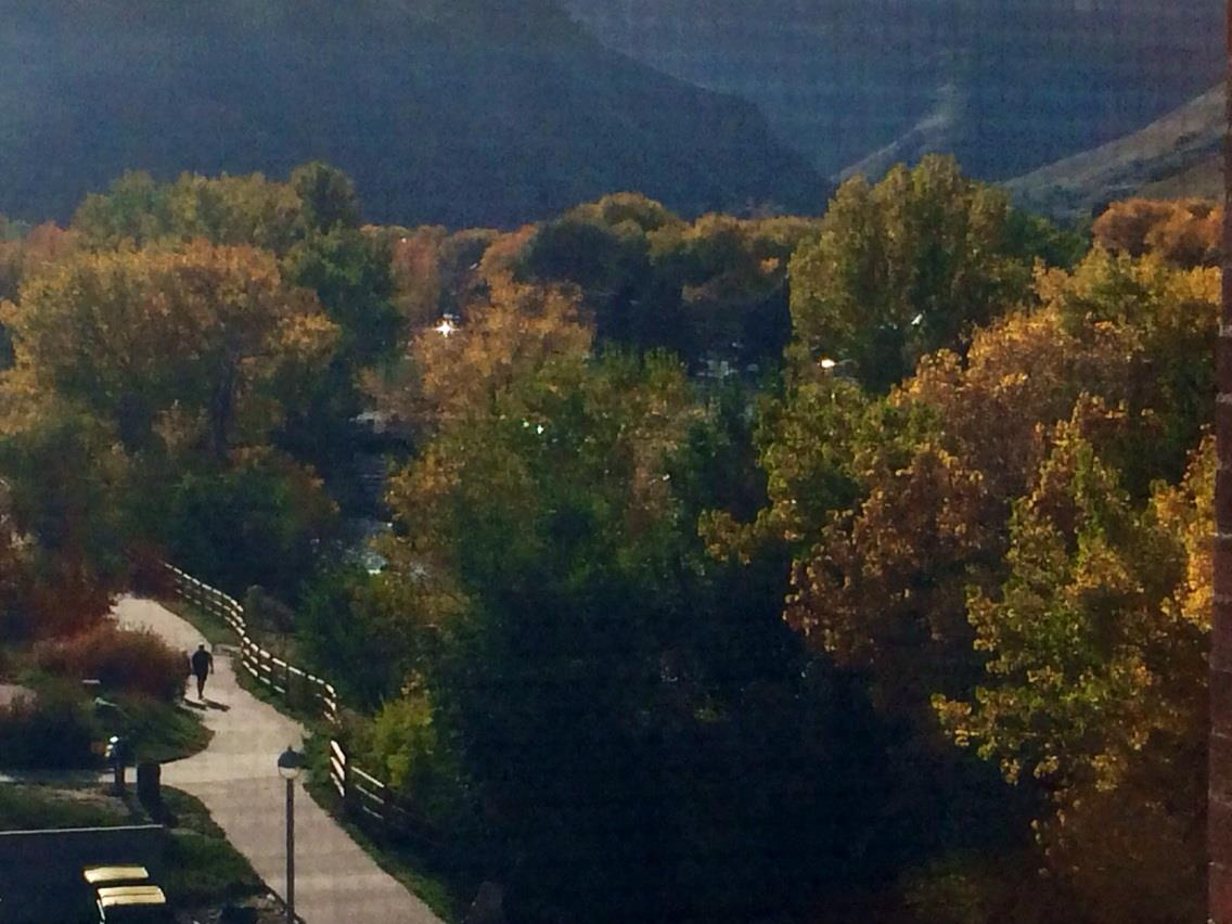 Cottonwoods along Clear Creek through the window screen.