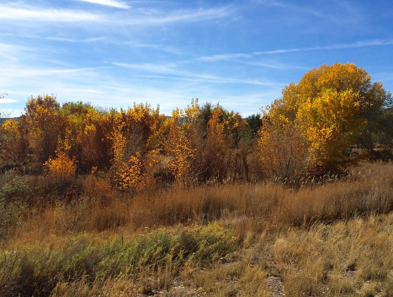 Cottonwoods showing autumn's final colors along the Rio Chama.
